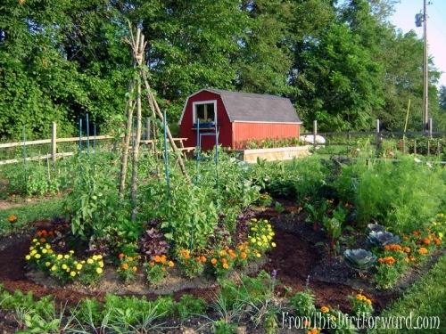 Beautiful vegetable garden veg garden pinterest for Gorgeous vegetable garden