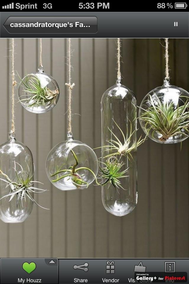 hanging plant holders  bathroom ideas  Pinterest