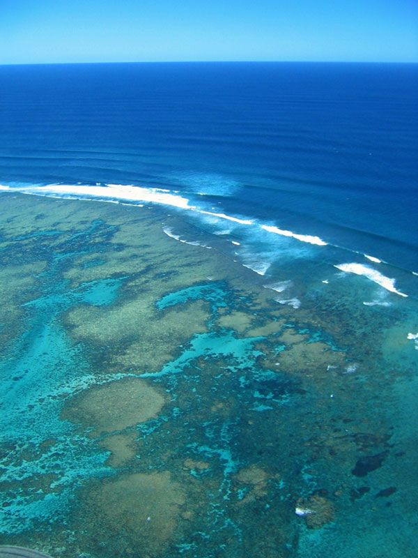 Ningaloo reef best aussie beaches pinterest - Ningaloo reef dive ...