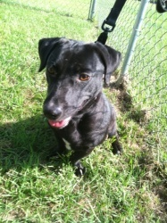 Doxie or bassett lab mix 3 4 years old she has a great personality