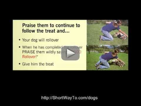 New video_ Basic dog obedience training. Tips techniques. Dog house potty behavior crate training -    funny dog petst raining puppy training cats potty trainig dog whisper k9  funny animals  best dog videos  jus for laugh dog trainig tehniques collars dog trainig classes dog trainig service grooming pets dog trainig at home dog trainig schools dog trainig tricks dog trainig advice puppy training book dog trainig book dog trainig video advanced dog trainig search and rescue dog trainig k9 puppy