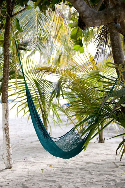 hammock on beach under palms