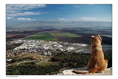 Metula Israel  city photos gallery : Metula, Israel, from Manara Cliff   What a Wonderful World!   Pintere ...