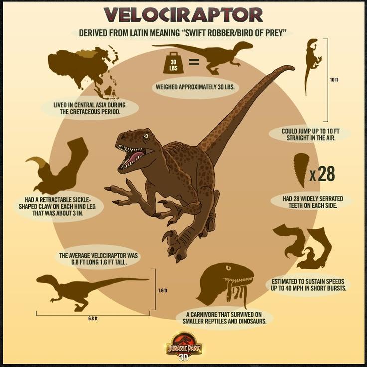 Velociraptor Facts | Dino's | Pinterest
