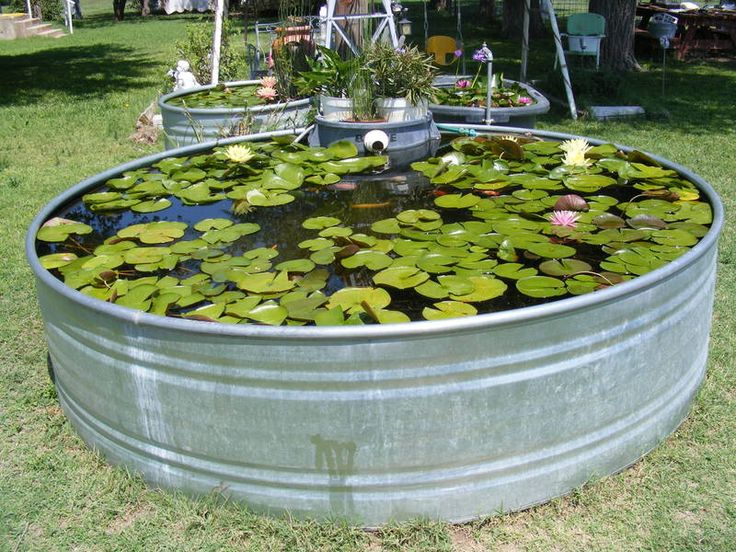 Galvanized tank used as a fish pond fish ponds pinterest for Fish tank in pond