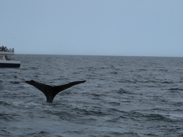 Cape cod whale watching discount coupons