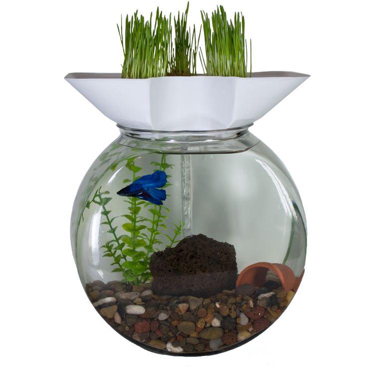 Aquaponics aquarium kickstarter plans diy for Aquaponics aquarium
