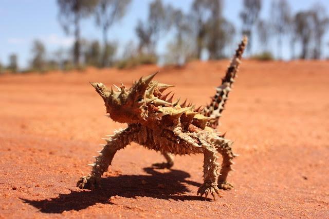 Pin by Ania Szczepinska on Living Desert | Pinterest