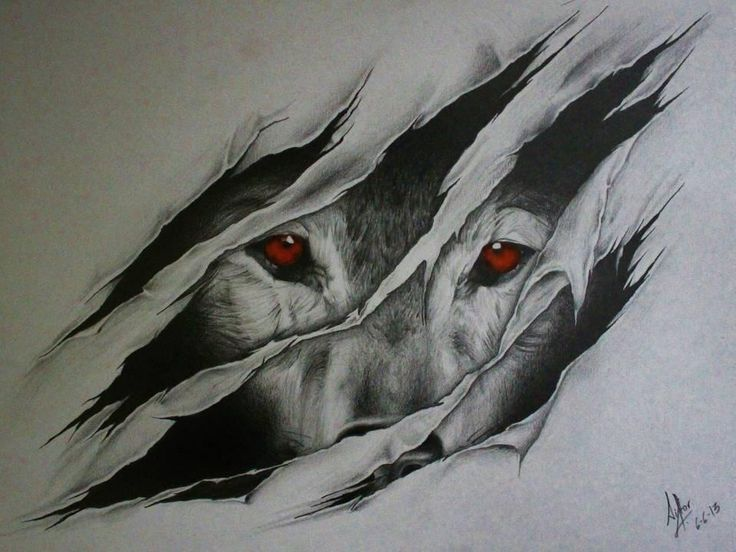 wolf drawing drawings