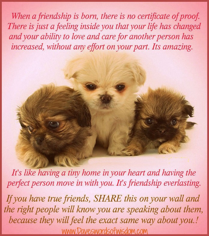 Dave S Words Of Wisdom Friends Friendship Pinterest