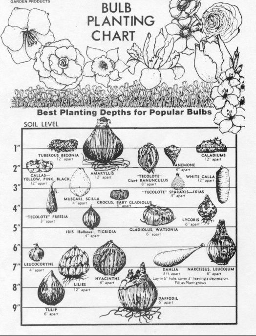 bulb planting chart