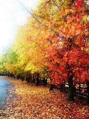 Fall in Cloverdale. (Courtesy Mollibug/myBudgetTravel) From: Coolest Small Towns in America. Click on the photo to nominate your favorite small town for 2014's contest!