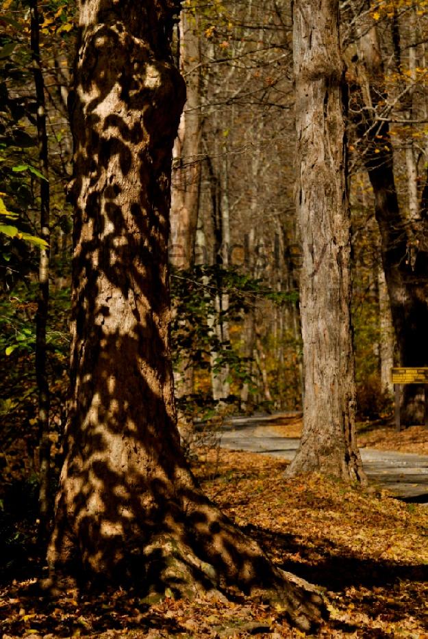 Macedonia (OH) United States  city photos : Leopard tree, Macedonia Connecticut | United States | Pinterest