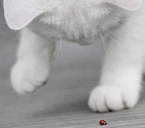 kitty & ladybug