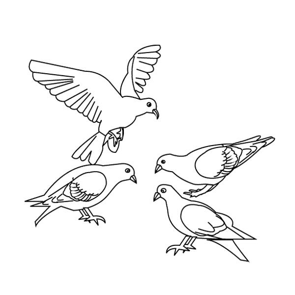 four bird dove coloring page kids coloring pages pinterest
