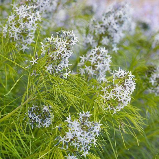 Winning Landscape Plants for Georgia