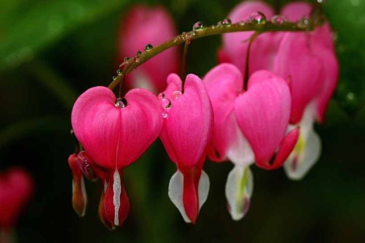 Hearts in the Garden / photo by tep31