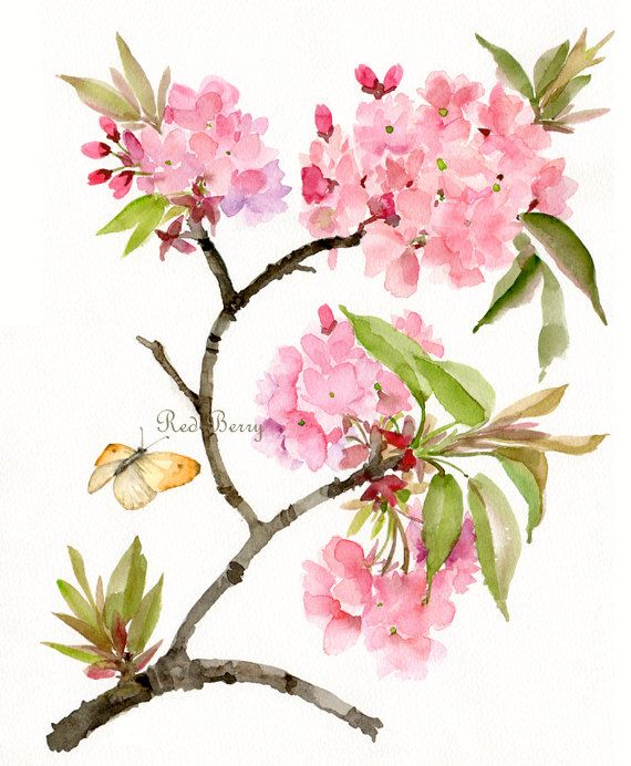 Flower watercolor spring blossom and butterfly floral art for Spring flowers watercolor