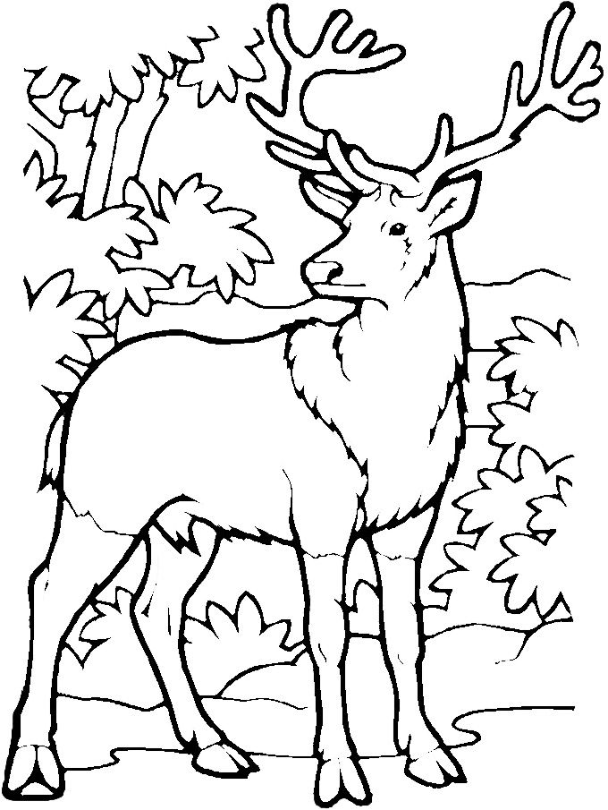 deer coloring pages free printable - photo#15