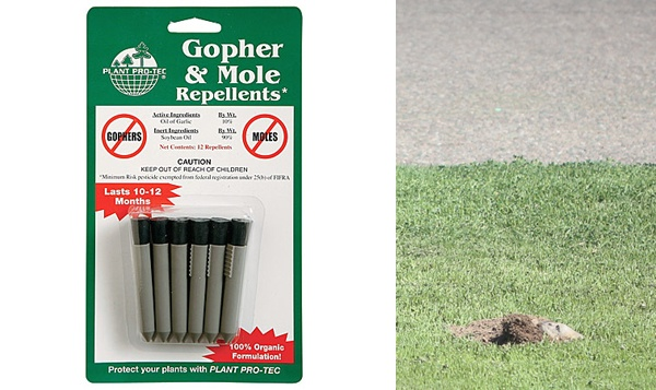 how to get rid of gophers and moles backyard and garden pinterest