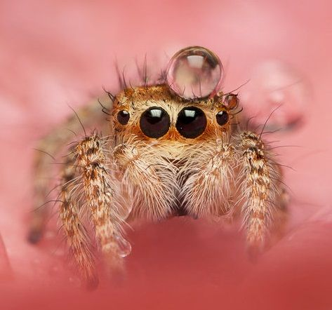 Jumping spider water hat - photo#11