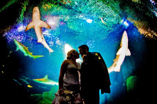 New Jersey Aquarium Wedding With Sharks From Jpg Photography