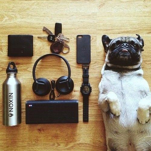 meetthepugs:  READY FOR THE WEEKEND?