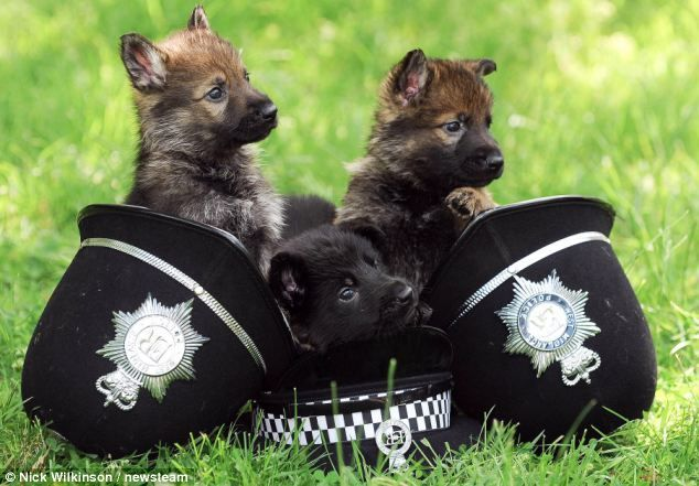 When we grrrrrow up we want to be police dogs!