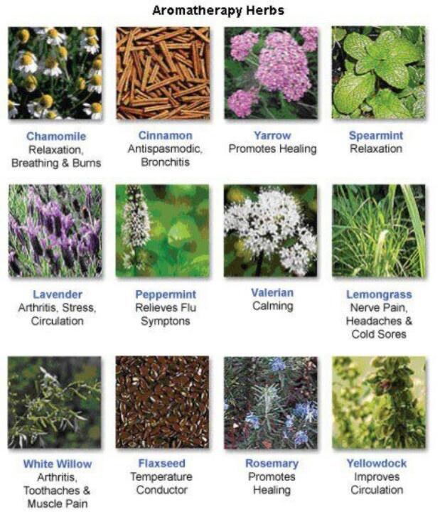 Health Benefits Of Plants Health Benefits Pinterest