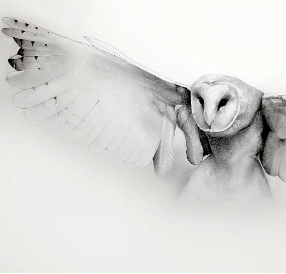 Flying owl pencil drawings - photo#5