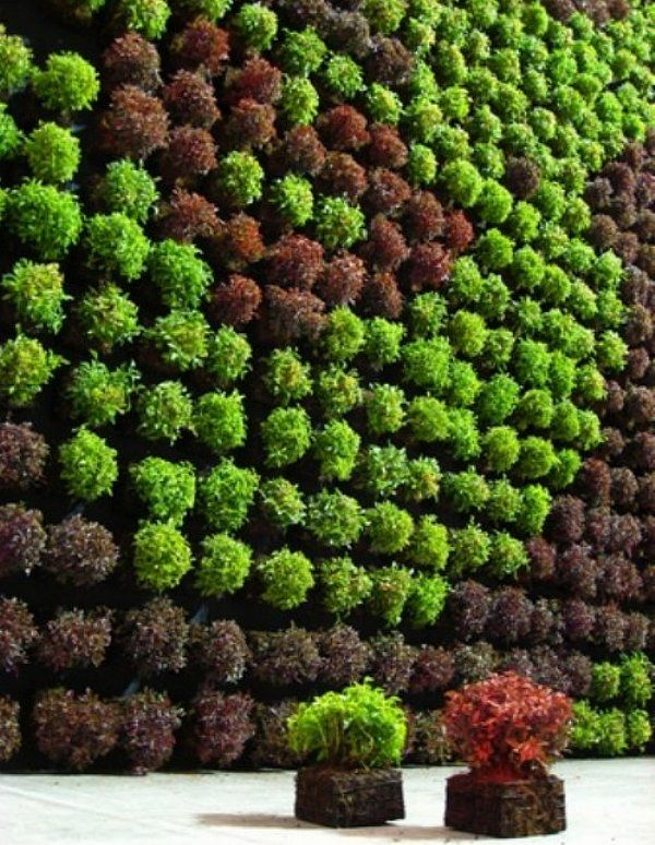 vertical garden Green Pinterest
