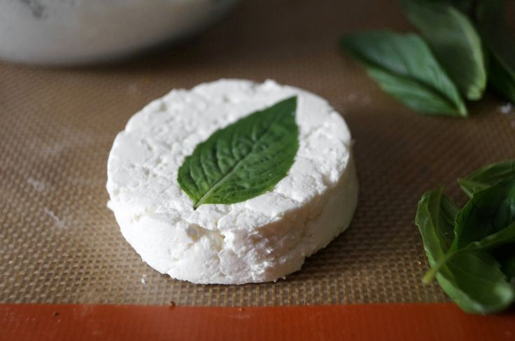 Primrose Everdeen's basil-wrapped goat cheese recipe, from The Hunger ...