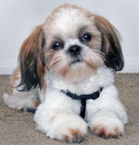 <3 <3 It looks like a dog named Bella