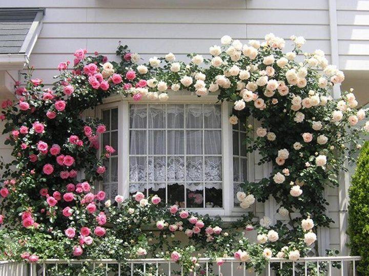 flower heaven.