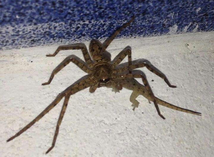 Spider eating l...