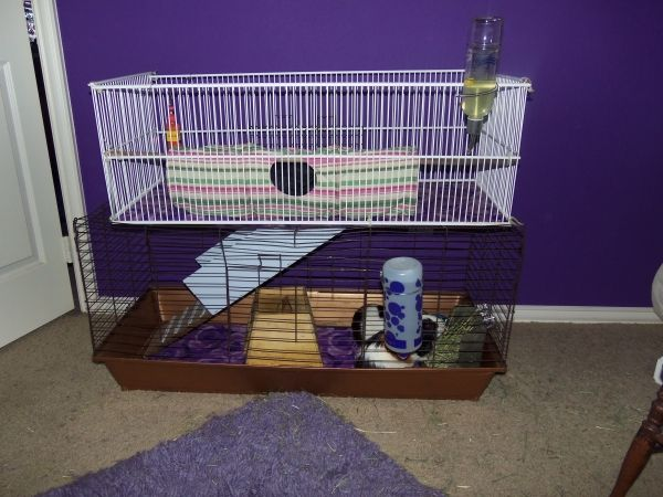 Pin by teressa melvin on pets pinterest for Guinea pig cage for 3