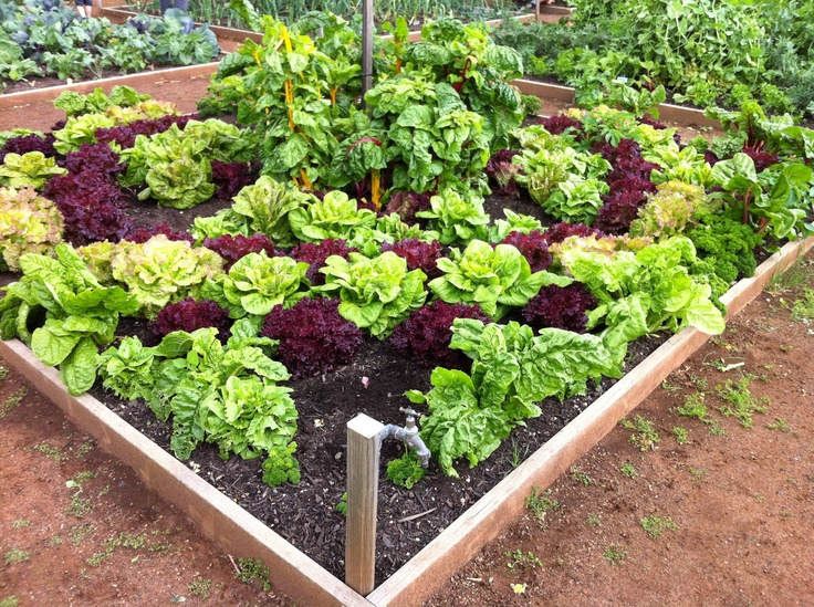 beautiful vegetable garden home ideals pinterest