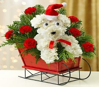 one dog open sleigh 1800flowers