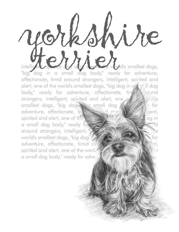 Line Drawing Of Yorkshire Terrier : Line drawing yorkie dog at getdrawings