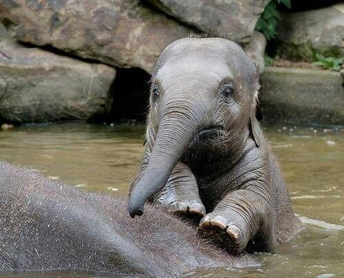 baby elephant 39 s bath time nature 39 s beauties pinterest. Black Bedroom Furniture Sets. Home Design Ideas