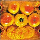 Heirloom Gold_Medal_Tomato_Seeds