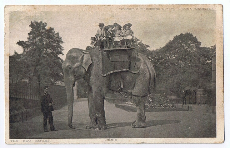 The World's Largest Elephant Jingo at the London zoo  - c 1900     Gosh what a sad story . Poor Jingo