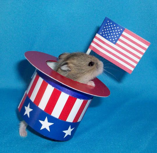 hamster 4th of july bbq