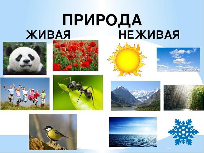 Живая и неживая природа поделки 36