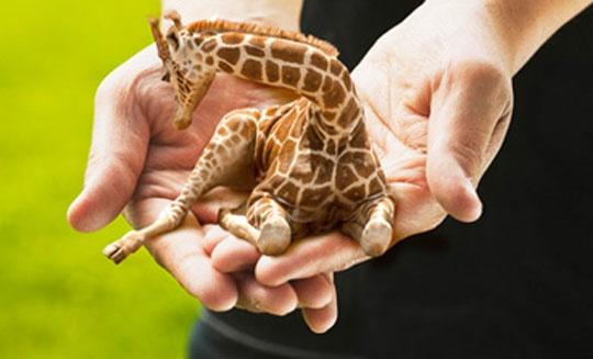 Faites Levage Mini Girafes