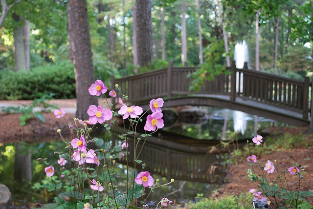 Norfolk Botanical Gardens Norfolk Va Hampton Roads