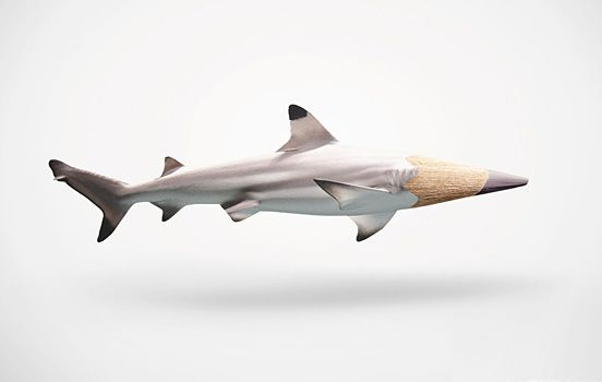 Pencil Shark    par Inspirationfeed