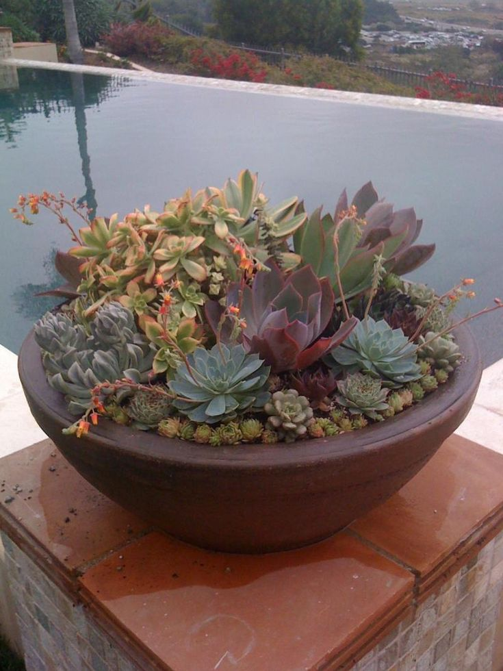 Pin by marika ouat on succulents pinterest Planters for succulents