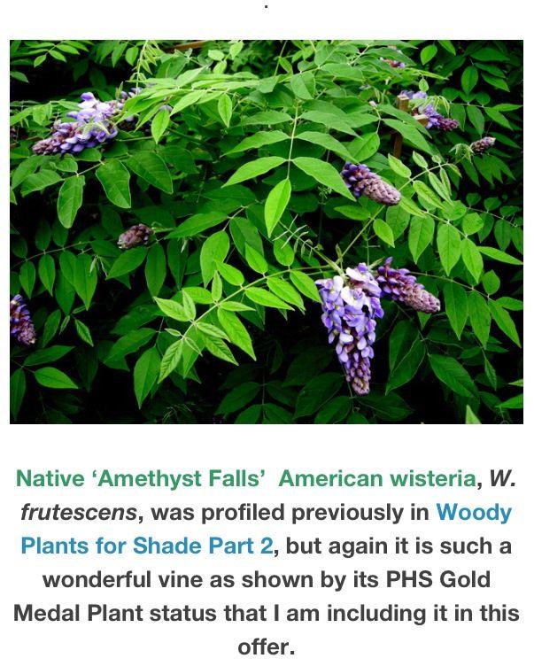 Part shade garden ideas photograph native part shade gar for Part shade garden designs