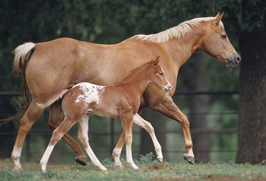 Breeding Horses For Color